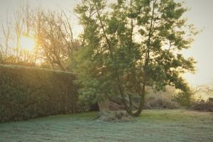 A Frosty Dawn 2 IMG_9396